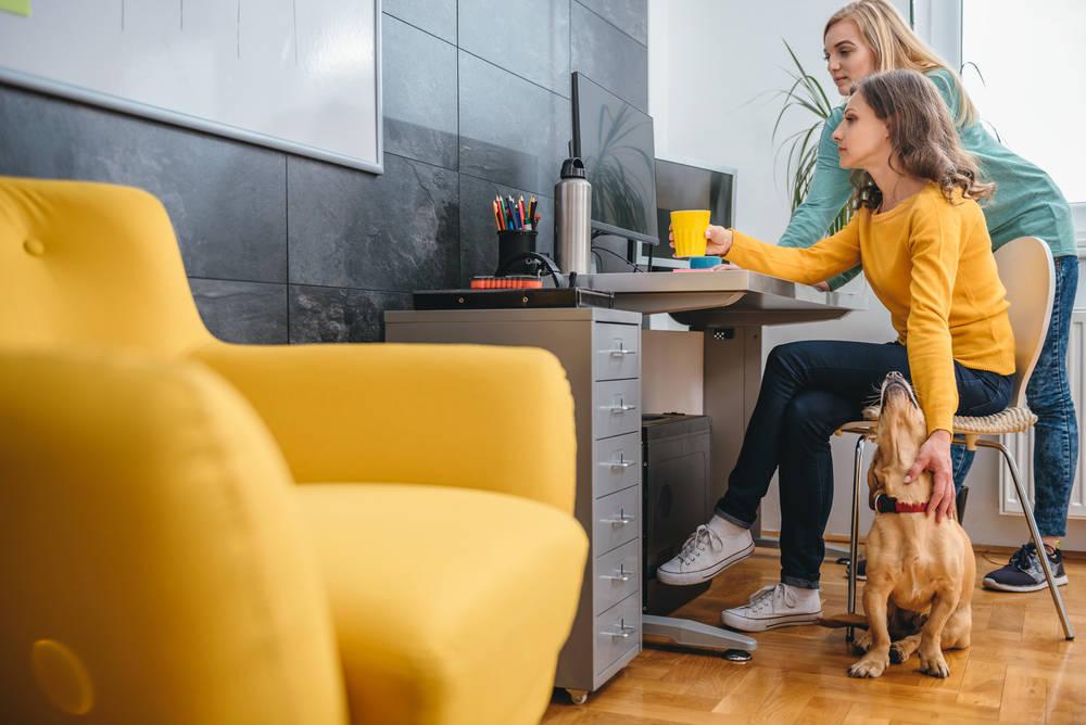 Espacios de trabajo pet friendly