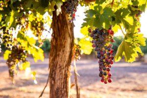 Una vuelta a España y al vino